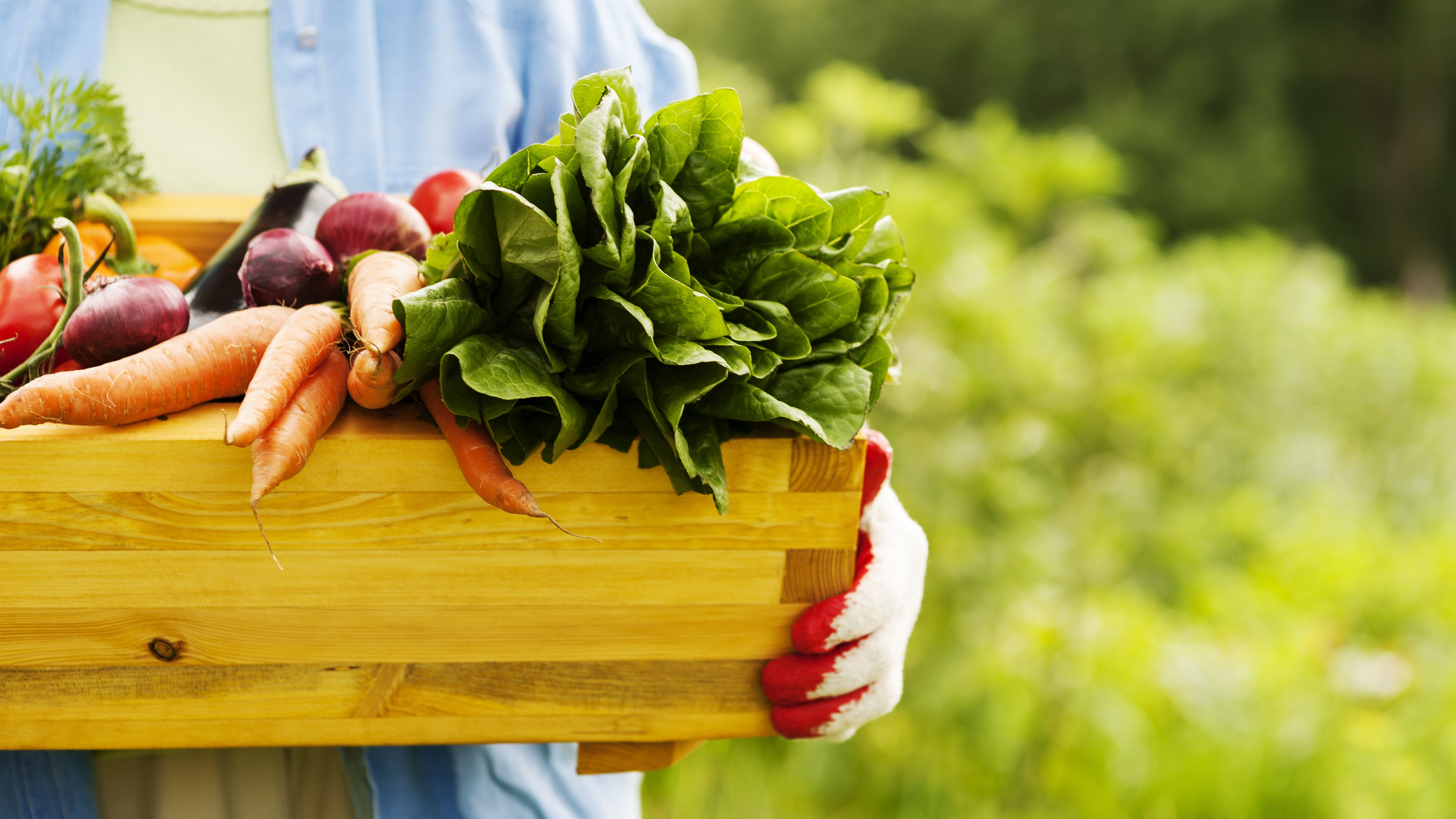 Digital-Talk-am-6-Mai-Mehr-Umsatz-Power-mit-Bio-Food